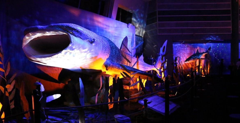 Δεινόσαυροι και τέρατα των θαλασσών!